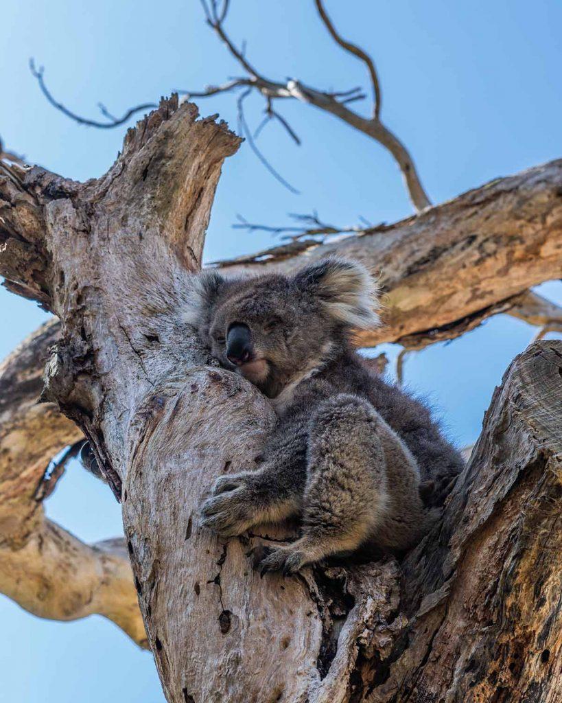 australie-natuur-travesol