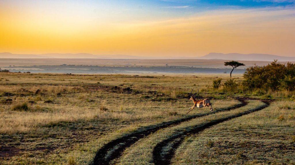 kenia-zomervakantie-travesol