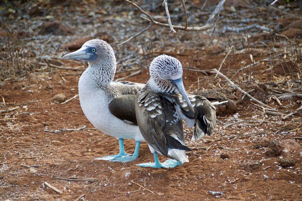 galapagos-eilanden-ecuador-travesol
