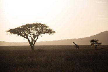 mooiste-plekken-tanzania-travesol