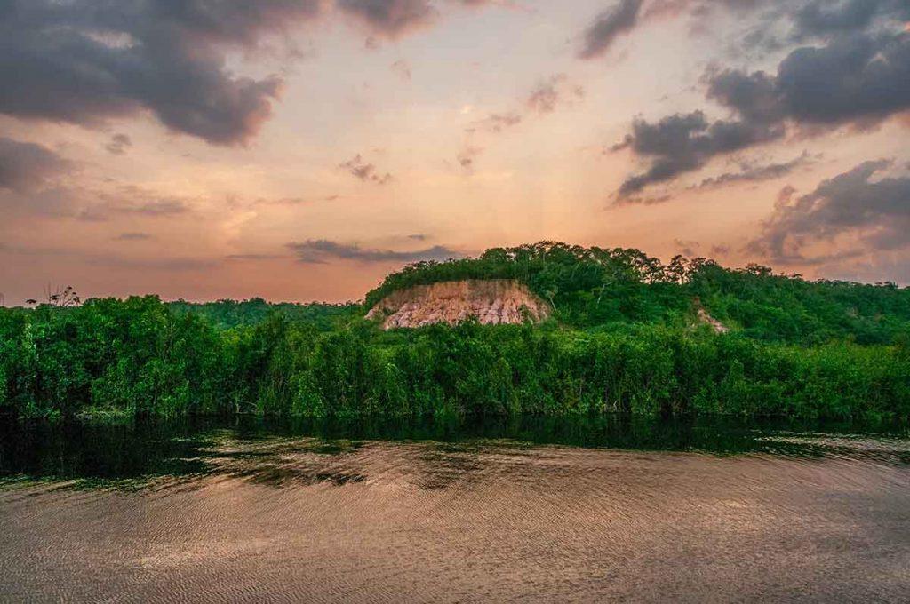 amazone-woud-zuid-amerika-travesol