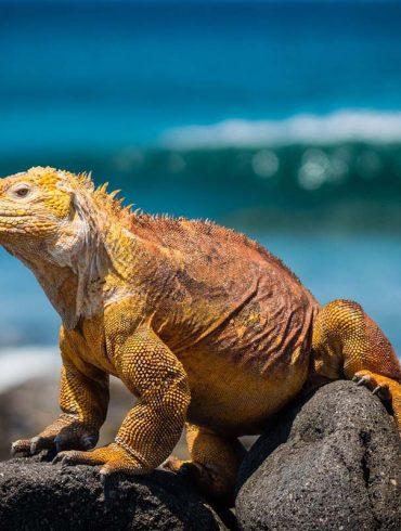 galapagos-eilanden-travesol