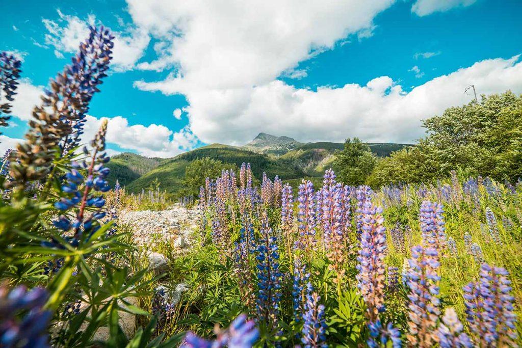bloemen natuur slowakije travesol